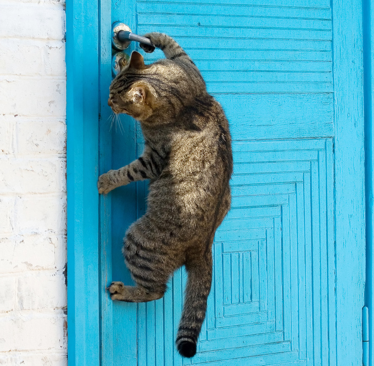 Mājdzivnieki skrāpē durvis